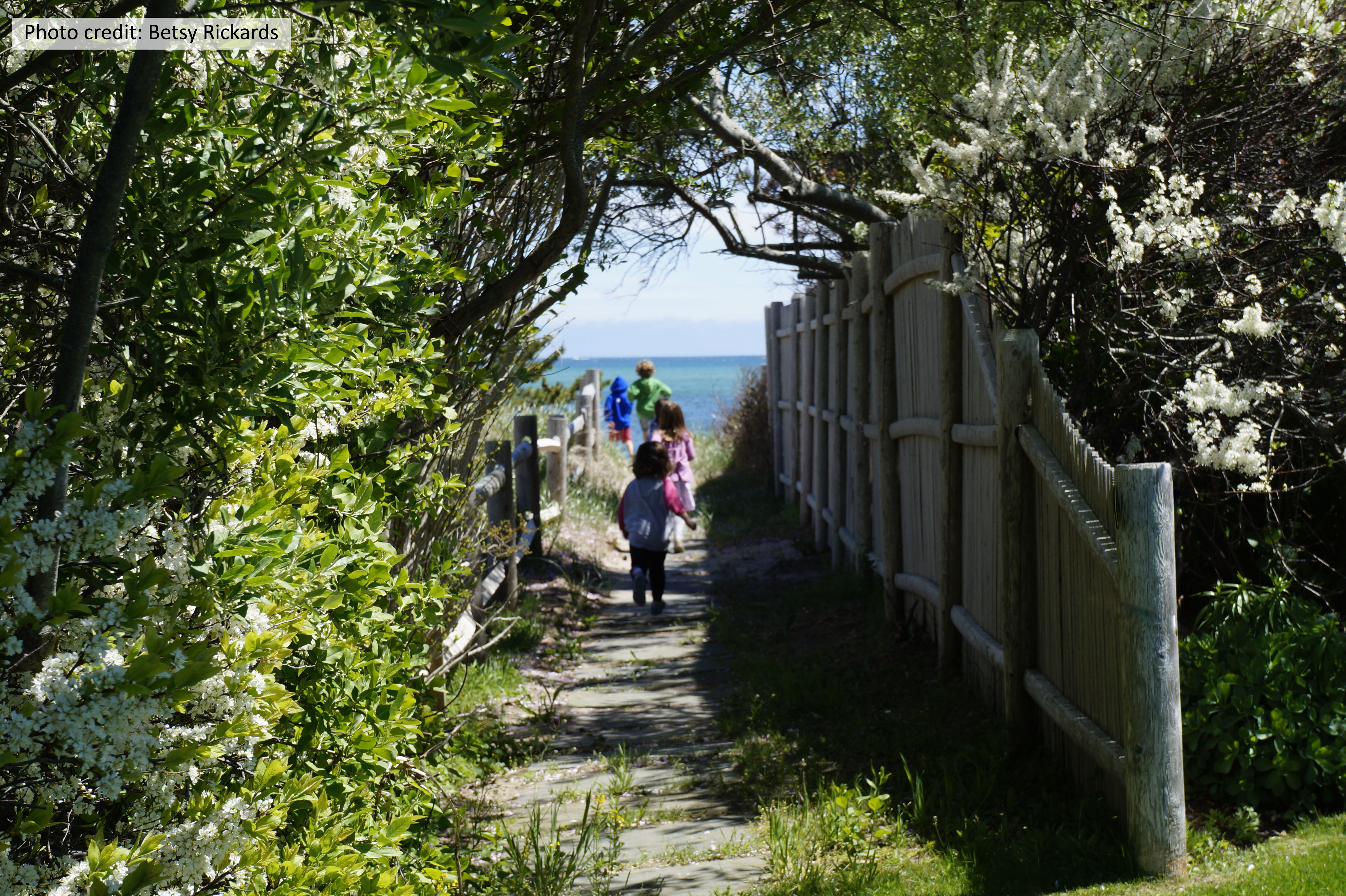 Cape Cod walkway in Massachusetts, fringed by native beach plums