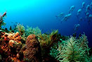 beautiful permit coral reef ferns