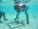 Reef monitoring program in Guam celebrated three years of success