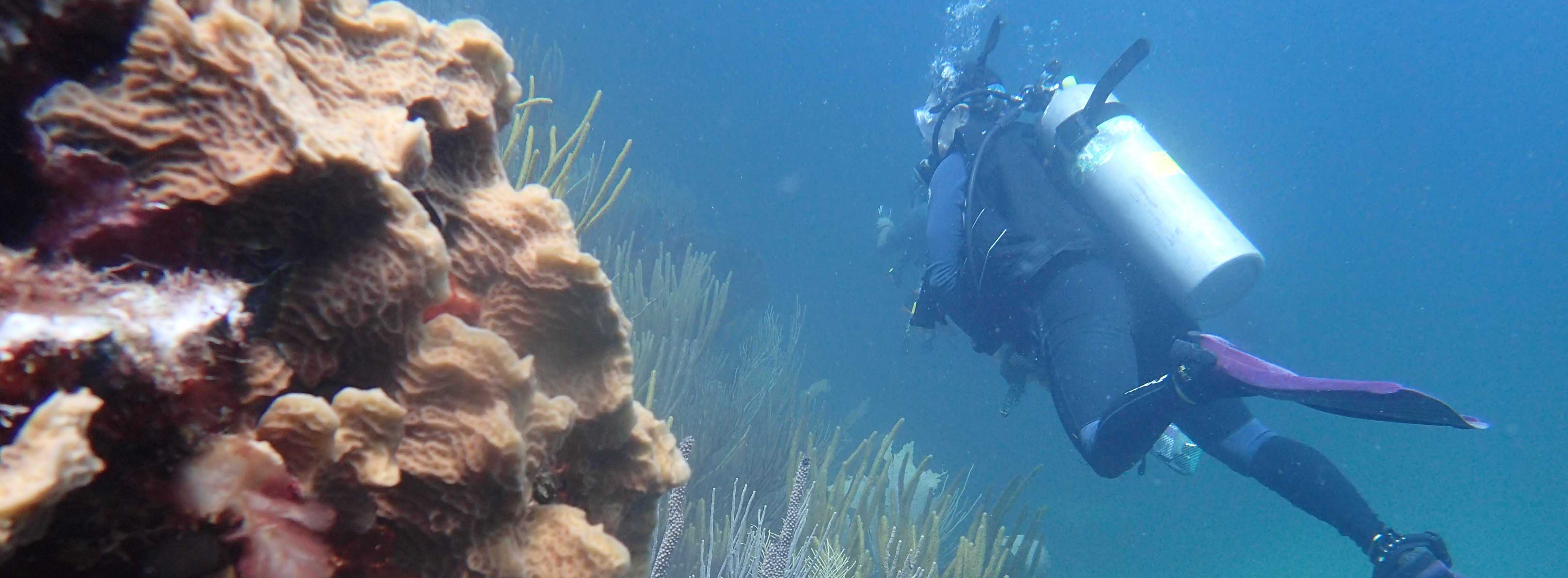 U.S. Virgin Islands Divers are Eyes on Coral Reef Health