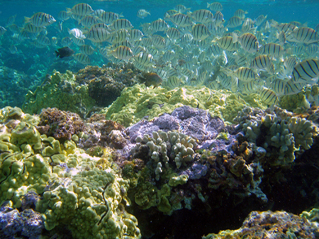 What is coral bleaching and what can you do to help?