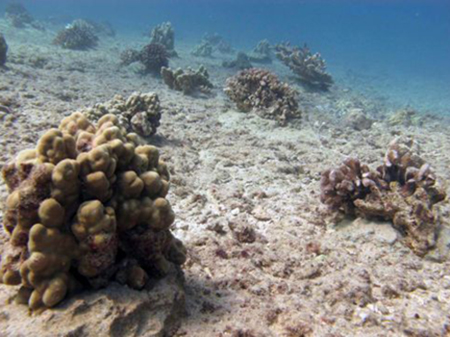 How We Help Make the Ocean a Better Place for Coral