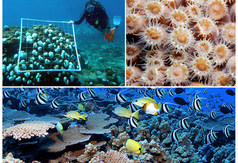 Cover-Adaptation Design Tool to help coral reef managers incorporate climate-smart design into their programs and projects at any stage of planning and implementation.
