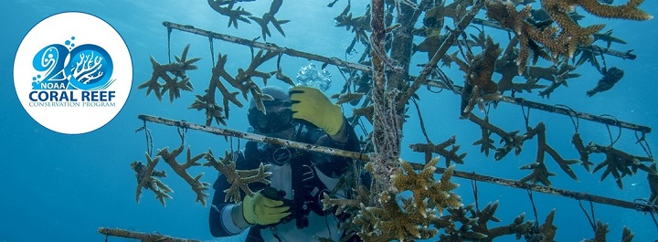 "A diver working with a coral ""tree"" structure"