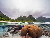 A diver in the National Park of American Samoa