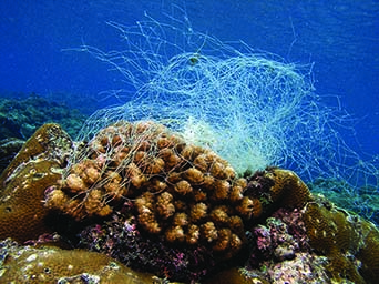 Corals and fishing net