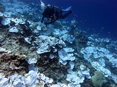 Bleached coral at Jarvis Island in the Pacific Remote Islands