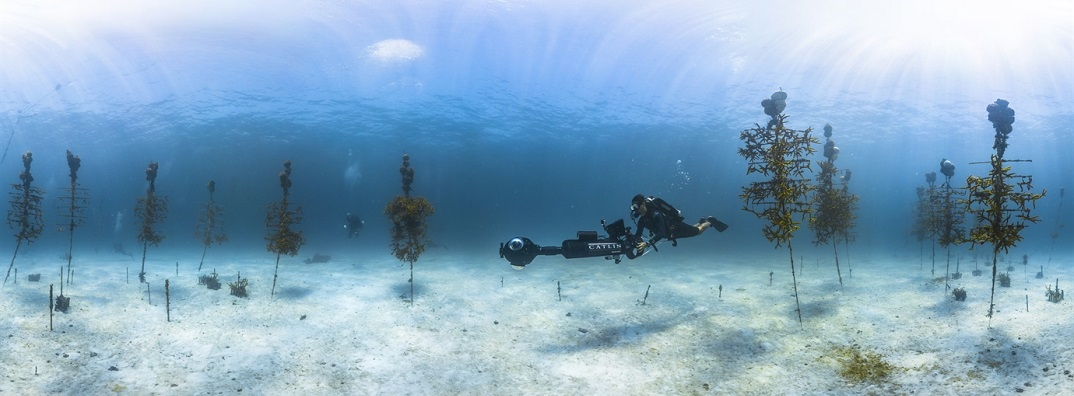 Ocean acidification has been shown to impact the growth of corals and contribute to dissolution of reefs. NOAA and partner scientists are working to restore corals in this coral reef nursery in the Florida Keys National Marine Sanctuary class=