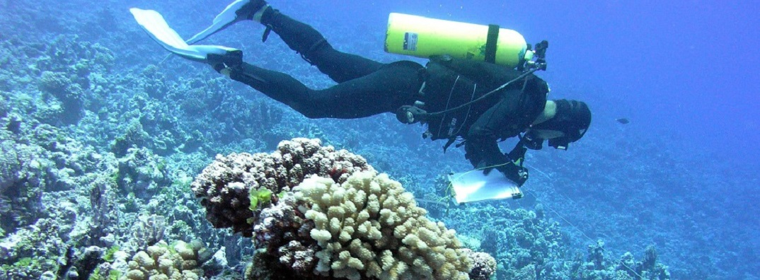 A scuba diver works along a transect line