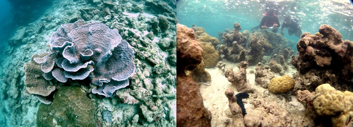 Corals and snorkelers in Yap, an island in the Federated States of Micronesia