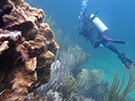 Image of a diver surveying a reef
