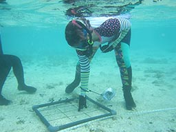 Reef monitoring in Guam celebrates 3 years of success