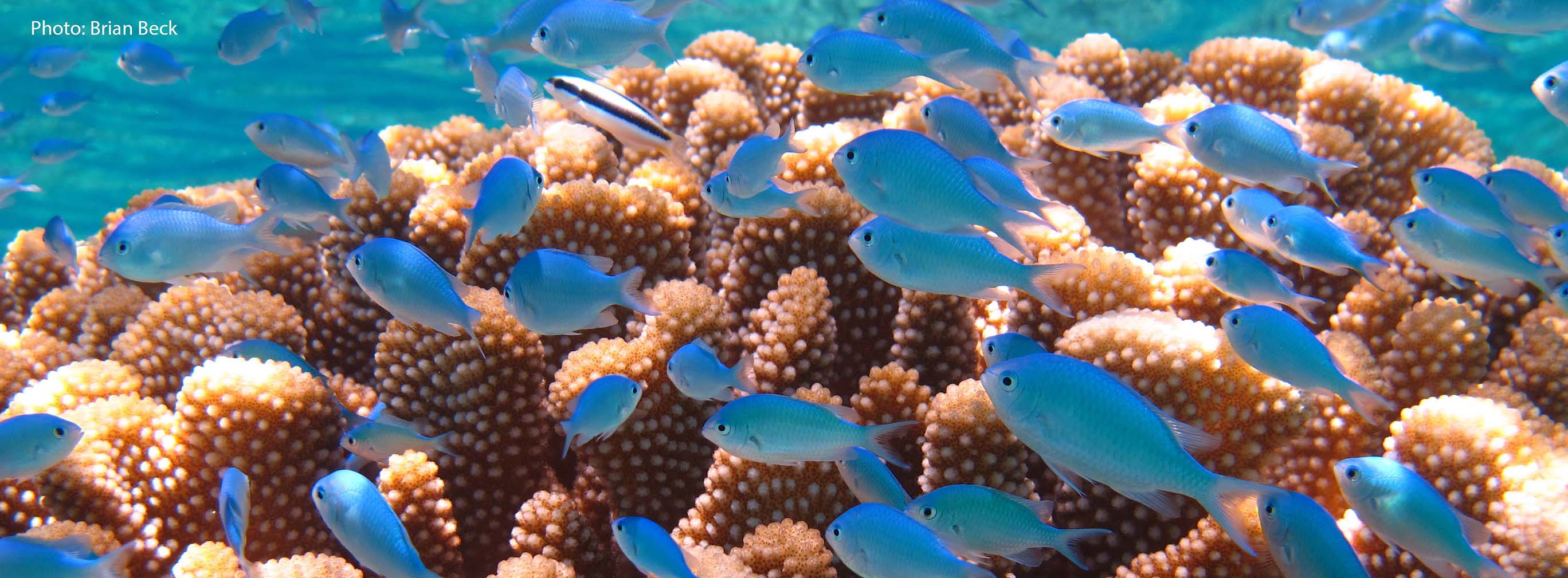 Image result for coral reef noaa