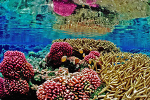 Image of color reefs