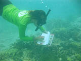 NOAA Coral Reef Management Fellow, Whitney Hoot surveys coral bleaching in Tumon Bay, Guam. Credit: NOAA