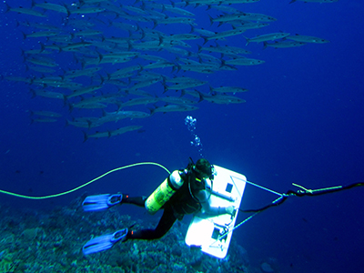 Marie Ferguson, a NOAA Coral Reef Ecosystem Program towed survey diver, is escorted by a school of Blackfin Barracuda (<i>Sphyraena genie</i>) along the sloping reefs of Swains Island, American Samoa.  Credit: NOAA