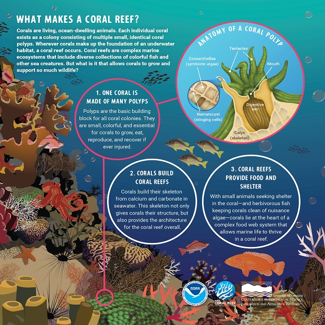 What Makes a Coral Reef