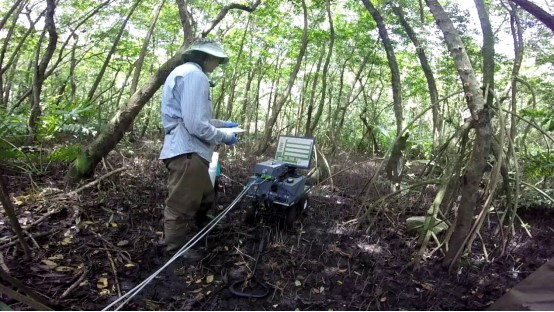 Researcher analyzing carbon sequestration in mangrove in Puerto Rico