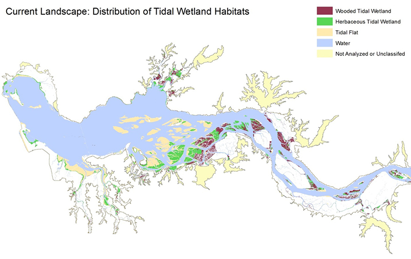 C-CAP High-Resolution Land Cover showing the current landscape of tidal wetland habitats in the lower Columbia Estuary