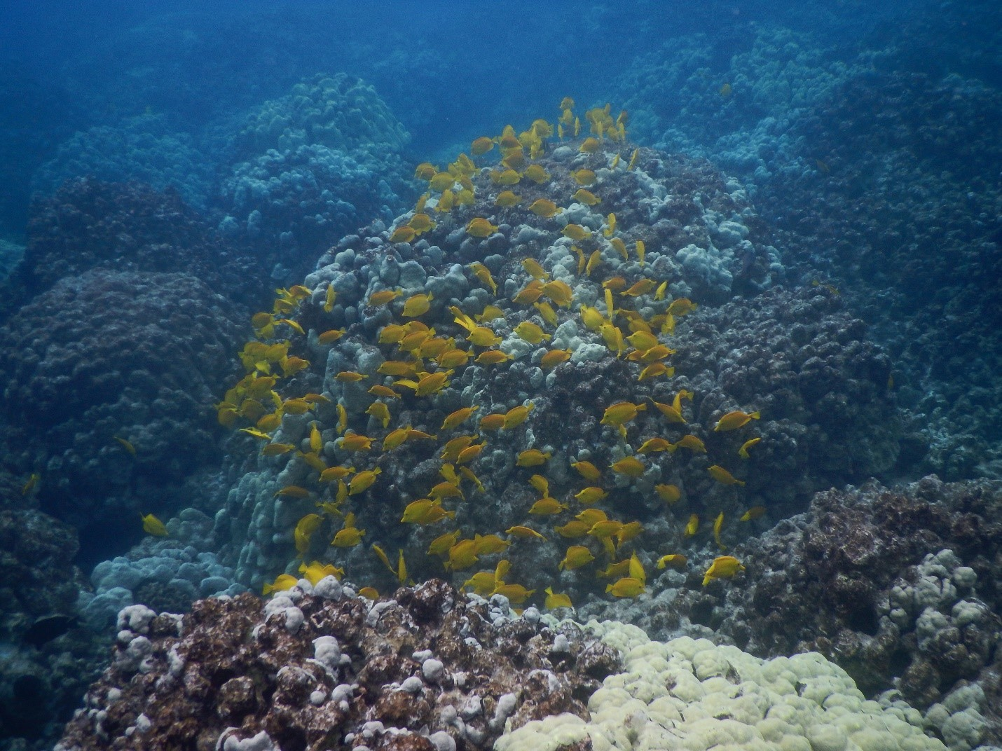 The Hawaii Coral Reef Initiative uses spatial planning and decision-support tools such as Marxan and SeaSketch to identify priorities for management