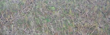 Katrinaforest