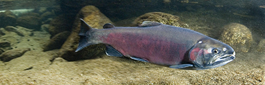 Klawocklagoon