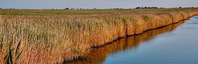Regional marsh systems
