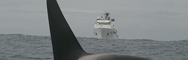 Whale fatalities