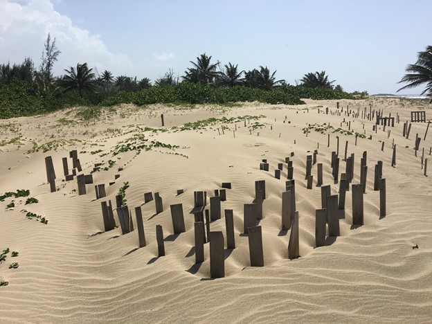 Sand accumulation in biomimicry matrix as a hazard mitigation resilience strategy in Finca Nolla, Camuy, Puerto Rico.