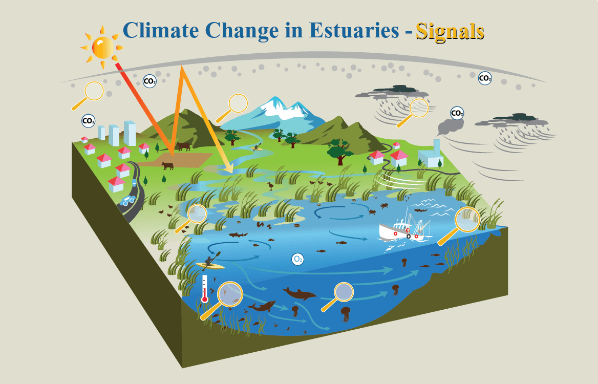 Exploring the Estuary and Climate Change Connection