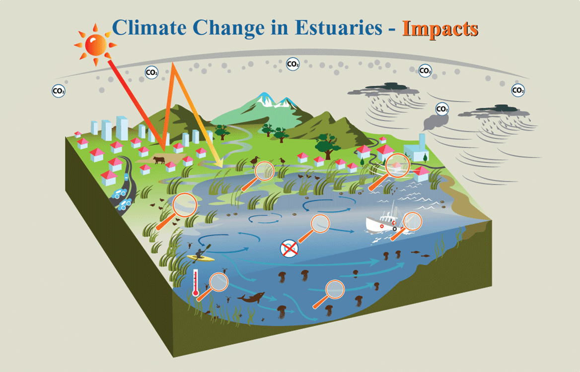 Illustrated estuary diagram