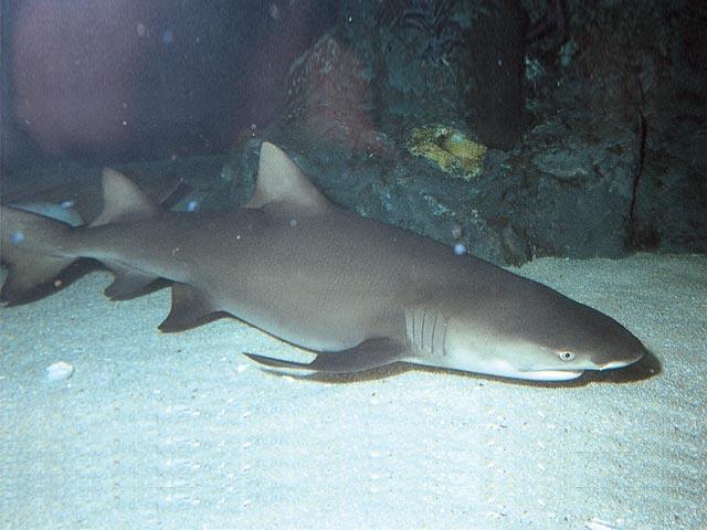 Sharks In The Estuary