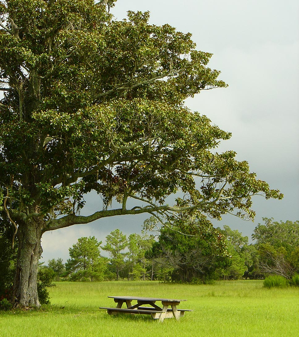 Landscape photograph of estuary with picnic table in Georgia