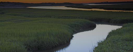 Image for lesson Bringing Wetlands to Market: A STEM Curriculum