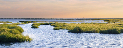 Image for lesson Estuaries: Nature's Water Filters