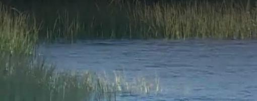 Screenshot of video Estuary Basics (Marsh Plants)