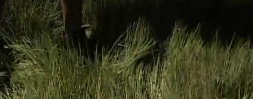 Screenshot of video Estuary Super Grass