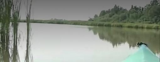 Screenshot of video Fish Creek Estuary