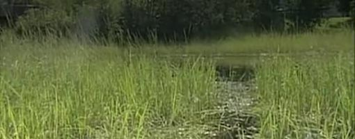 Screenshot of video Kakaagon-Bad River Estuary