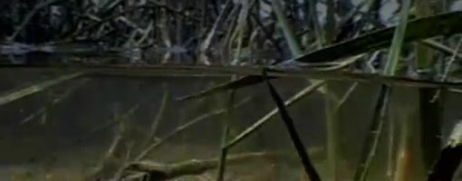 Screenshot of video Marsh Migration