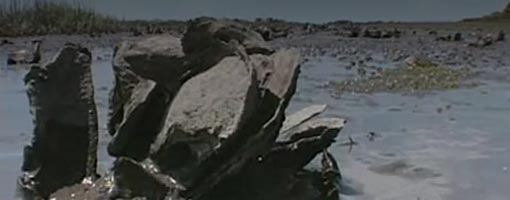 Screenshot of video Oysters of the Charlotte Harbor Estuary