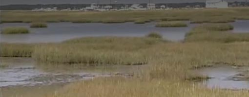 Screenshot of video Sampling Seagrass