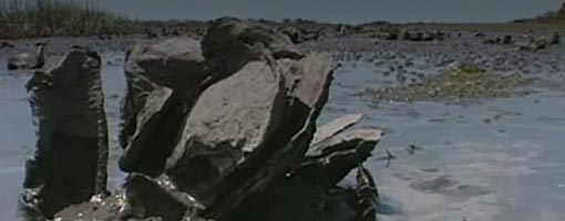 Screenshot of video SCORE for Oysters