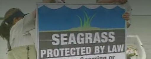 Screenshot of video Sea Grass PSA