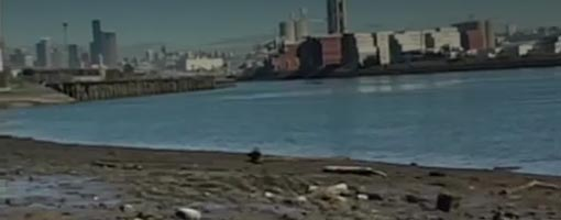 Screenshot of video Urban Estuaries: Restoration