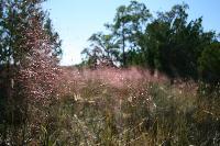 ACE%20Basin%20NERR%204_sweetgrass.jpg