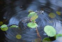Turtle%20MaryHollinger_NOAA.jpg