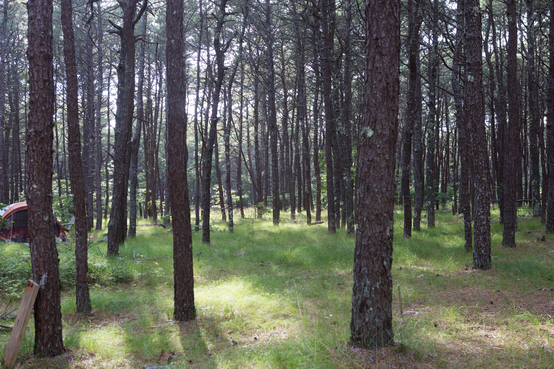 Waquoit_NERR_forest.jpg