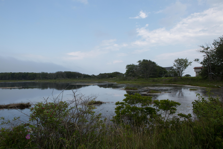 Wells_NERR_wetland.jpg