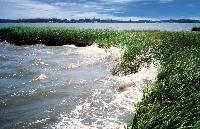 coastal_wetlands_NOAA.jpg
